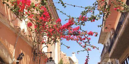 Blomstrande bougainvillea i Rethymnon stad, Grekland.