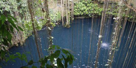 Cenote på Riviera Maya i Mexiko.