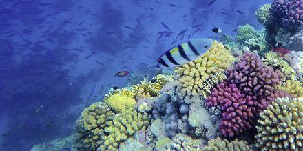 Upptäck färgglada fiskar.