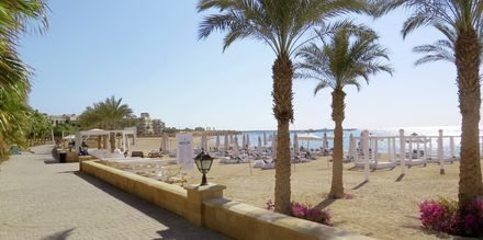 Strand med palmer i Sahl Hasheesh.