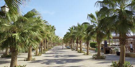 Den palmkantade strandpromenaden i Sahl Hasheesh.