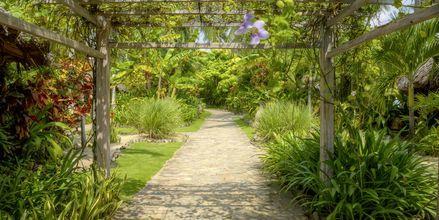 Trädgården på Sailing Club Mui Ne Resort i Phan Thiet, Vietnam.