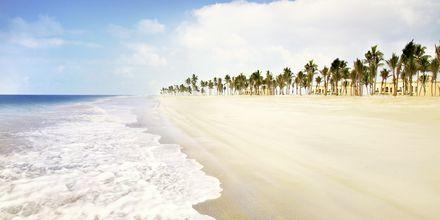 Stranden vid Salalah Rotana Resort i Salalah, Oman.