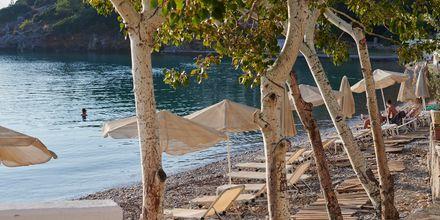 Njut av sköna dagar på stranden i Samos  stad, Grekland.