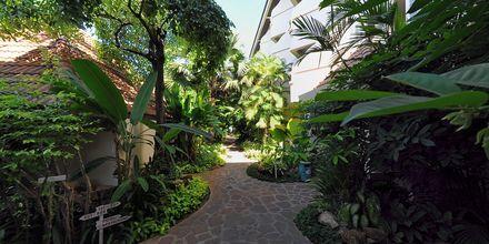 Samui Natien Resort på Koh Samui, Thailand.