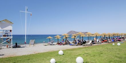 Stranden vid hotell Santa Helena Beach i Platanias på Kreta, Grekland.