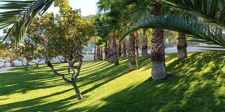 Gröna områden på Santorini Kastelli Resort på Santorini, Grekland.