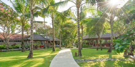 Trädgård på hotell Segara Village, Bali, Indonesien.