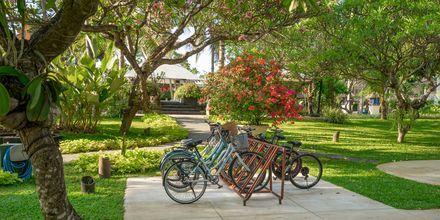 Hyr cyklar och utforska omgivningarna.