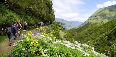 Vandring på Madeira, Portugal.