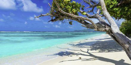 Det finns runt 80 stränder på Seychellerna. Här är  Anse Source d'Argent på den lugna ön La Digue.