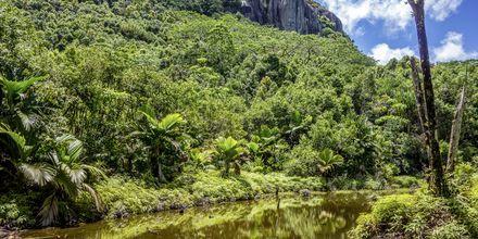 Nationalparken Morne Seychellois ligger på huvudön Mahé och erbjuder vackra vandringsleder.