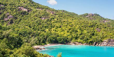 Viken och stranden Anse Mayor på Seychellerna är undangömd och lugn.
