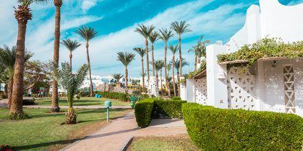 Hotell Shams Safaga Resort i Abu Soma, Egypten.