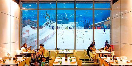 Åk skidor inomhus i Dubai.