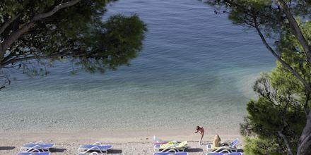 Stranden vid hotell Simic i Makarska, Kroatien.