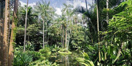 Singapores botaniska trädgård är ett måste för den växtintresserade.