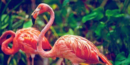 Singapore Zoo är känt världen över.