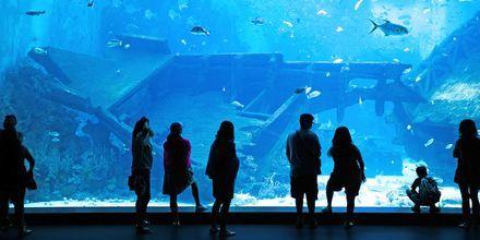 Marine Life Park är ett vattenmuseum och äventyrsland på ön Sentosa, Singapore.