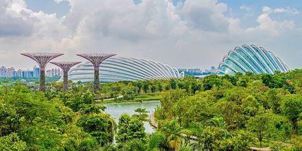 Parken vid hamnen, Garden by the Bay, är trevligt för hela familjen med växthus och konstgjorda träd.