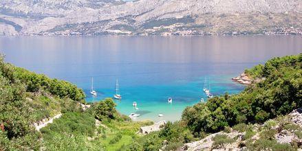 Längs Kroatiens kust finns många fina badvikar.