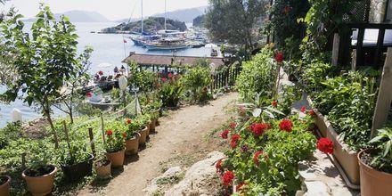 Under resan besöker du bland annat den grönskande byn Simena.