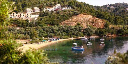 Vy över Tzaneria Beach på Skiathos, Grekland.