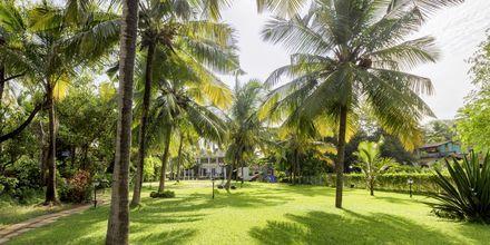 Trädgård på hotell Sonesta Inns i Goa, Indien.