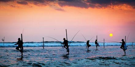 Fiskare på Sri Lanka.