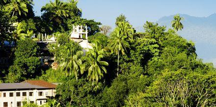 Frodigt landskap kring Kandy, Sri Lanka.