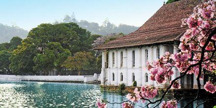 Den heliga tandens tempel i Kandy på Sri Lanka.