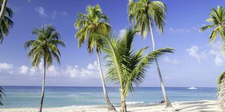 Strand på Sri Lanka.