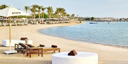 Stranden vid hotell Steigenberger Pure Lifestyle i Hurghada, Egypten.