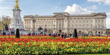 Buckingham Palace i London.
