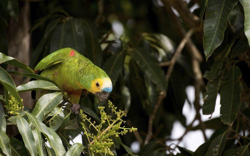 i Sydamerika finns ett rikt och spännande djurliv.