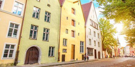 Färgglada hus i Tallinn, Estland.