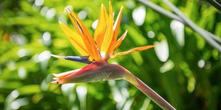 Det sköna klimatet är perfekt för färgglada växter.
