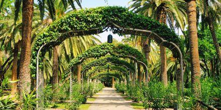 Teneriffa är känd som den gröna ön av Kanarieöarna.