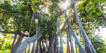 På Teneriffa väntar magiska naturupplevelser.
