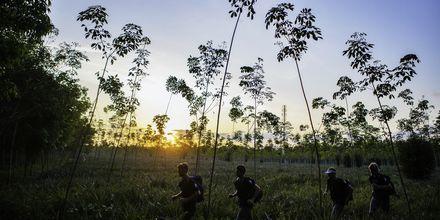 Träna löpning medan solen går ner bakom djungellandskapet.