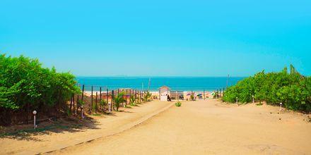 Stranden på The O Hotel Goa.