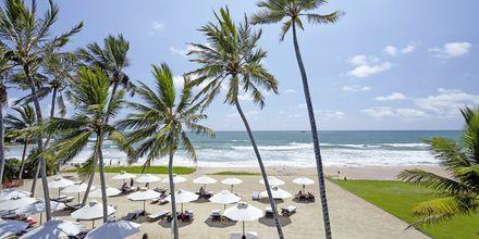 Stranden vid hotell The Surf i Bentota, Sri Lanka.
