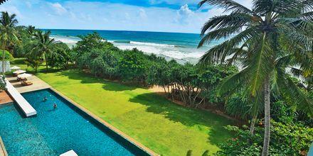 Poolen och trädgården på The Temple Tree i Bentota på Sri Lanka.