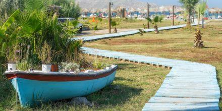 Vackra miljöer i Tigaki på Kos, Grekland.