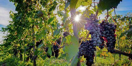 Väl i Toscana är det nästan ett måste att besöka en vingård för att få smak på regionens goda viner.