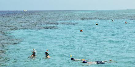 Ta en snorklingstur i vackra Röda havet och upptäck mängder med färgglada fiskar.
