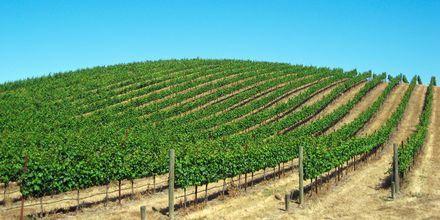 Vinodlingar i Napa Valley utanför San Francisco.