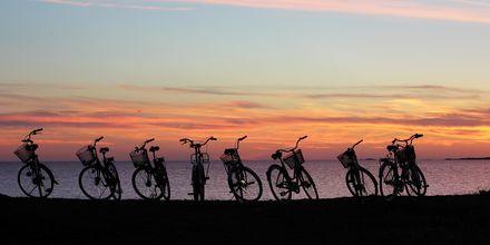 Cykeltur med gänget i skymningen.