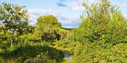 Naturen i Varberg är vacker och lämpar sig perfekt för vandring eller cykelturer.