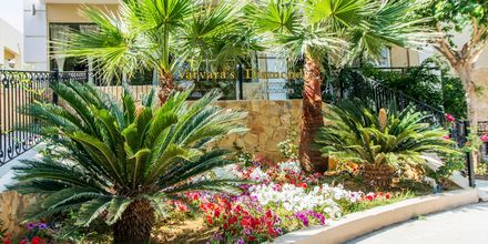 Hotell Varvara's Diamond i Rethymnon, Kreta.